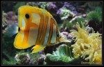 おもろい熱帯魚!