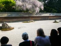 At Ryoan Temple whose rock garden is world-famous.